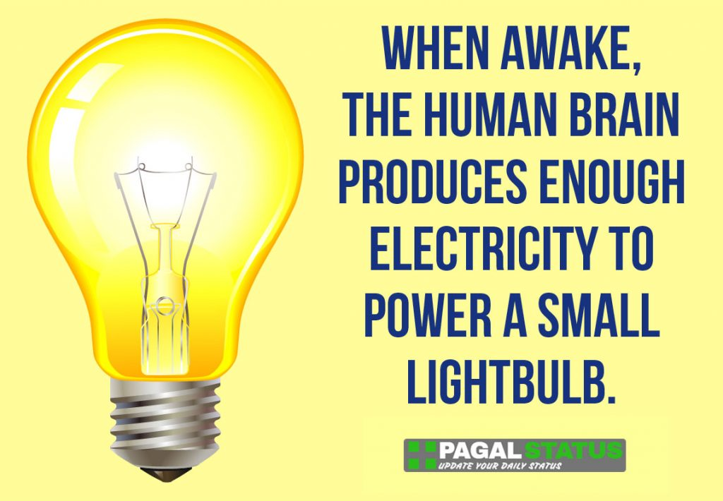 When awake the human brain produces enough electricity to power a small lightbulb,  Interesting Whatsapp Status