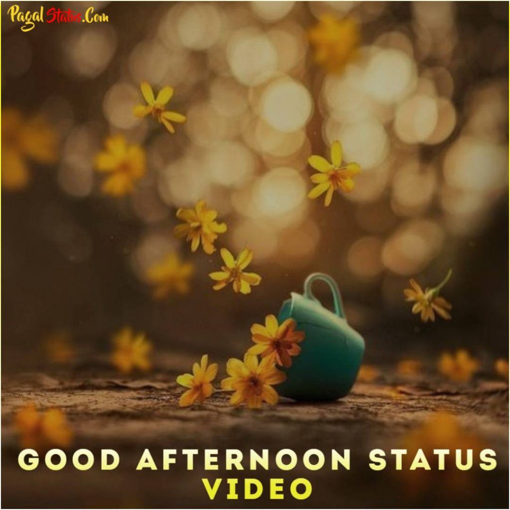 Good Afternoon Whatsapp Status Video