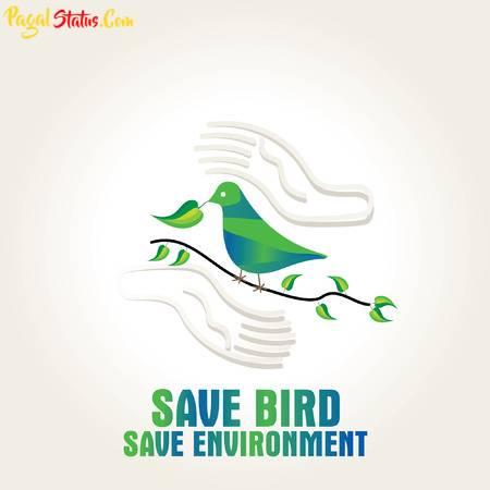 Save Birds Whatsapp Status Video